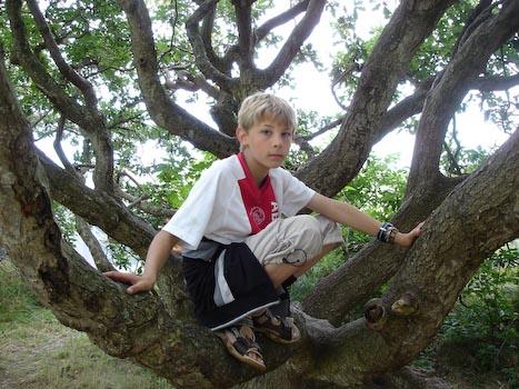 Boris in een boom op Vlieland